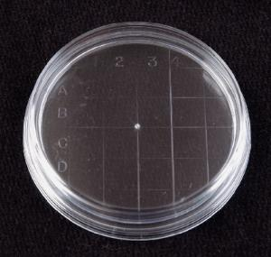 VWR® Disposable Petri Dishes